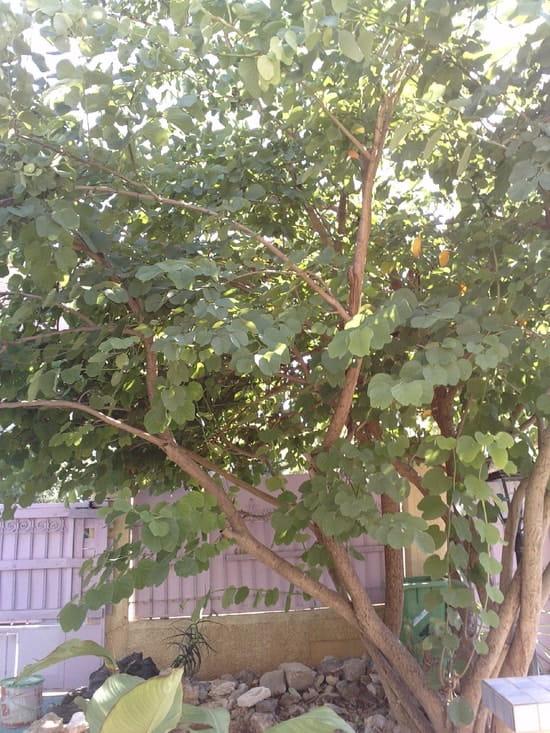 Quel est le nom de cet arbre que j 39 ai dans mon jardin r solu arbres et arbustes - Quel arbre dans mon jardin ...