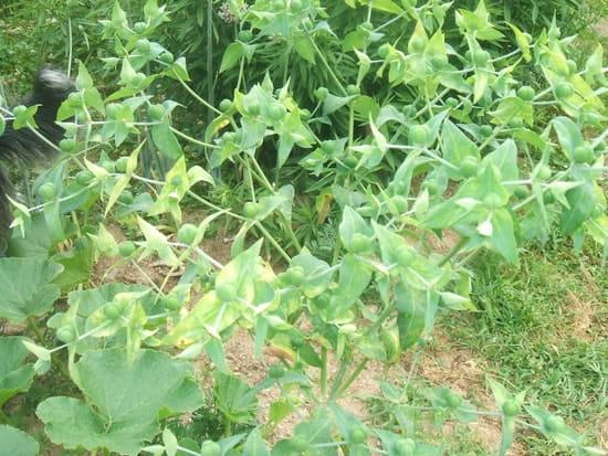 Comment faire fuir les taupes r solu comment se - Comment faire fuire les taupes dans le jardin ...