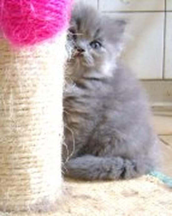 j 39 ai un chat qui a 4 ans il lui arrive de faire ses besoins devant de sa caisse chats. Black Bedroom Furniture Sets. Home Design Ideas