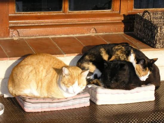 Comment Faire Pour Que Les Chats Male Arretent D Uriner Dans La