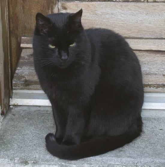 gratuit noir chatte coups