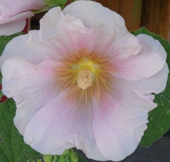 Je suis une nouvelle jardini re jusqu 39 quand peut on planter des bulbes - Quand planter bulbes tulipes ...