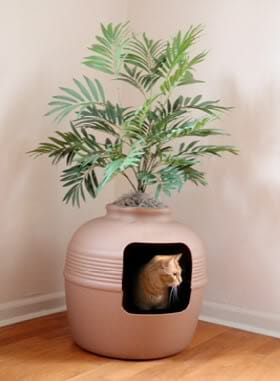 litiere chat plante
