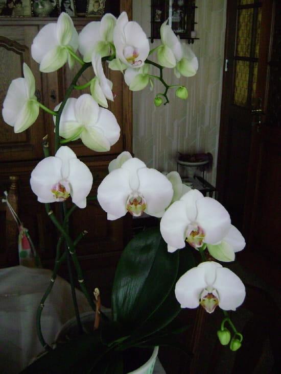 Comment conserver le plus longtemps possible une orchid e - Comment couper les tiges d une orchidee ...