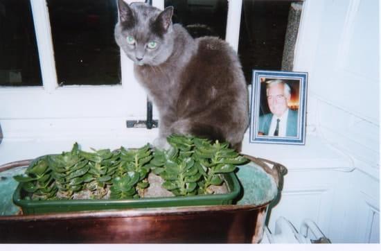 savez vous que les chats sont peuvent developper une jaunisse en vieillissant chats. Black Bedroom Furniture Sets. Home Design Ideas