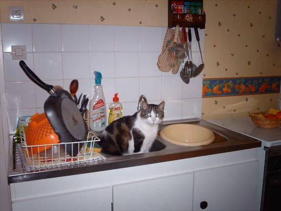 Comment faire pour emp cher mon jeune chat de trop s 39 loigner de la maison chats - Comment eloigner les chats de mon jardin ...