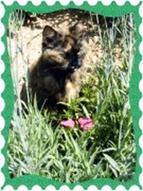 Comment faire pour emp cher mon jeune chat de trop s - Comment eloigner les chats de mon jardin ...
