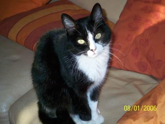 graisse noir chatte chat NY
