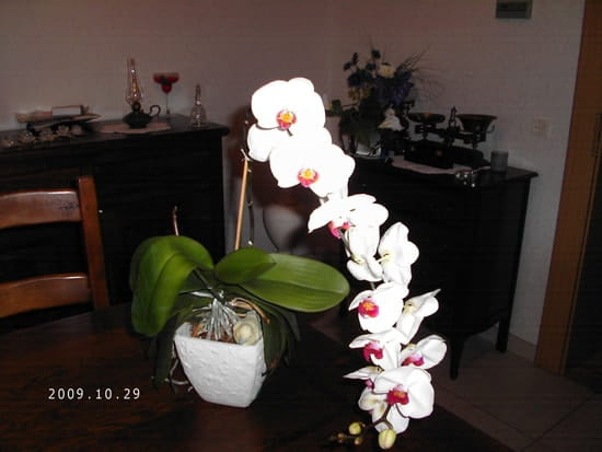 orchidee fleur qui seche