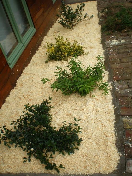 connaissez vous fleurs et plantes couvre sol fleurs. Black Bedroom Furniture Sets. Home Design Ideas