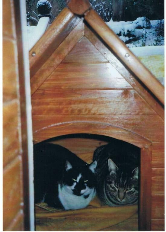 frontline combo est il vraiment efficace pour lutter contre les puces de chat. Black Bedroom Furniture Sets. Home Design Ideas