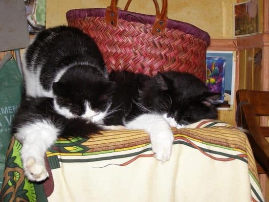 Jusqu 39 quel age peut on st riliser une chatte - Jusqu a quel age peut on emprunter ...