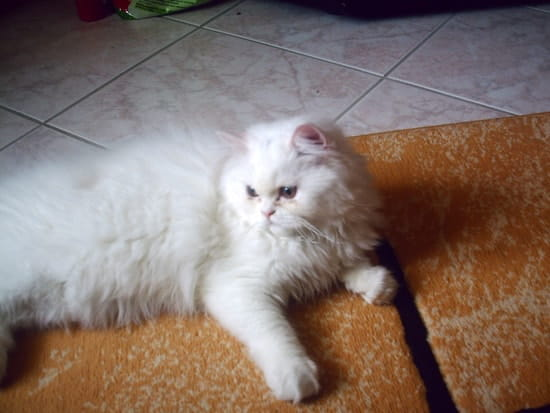 Comment faire pour que mon chat ne fasse plus pipi sur mes sacs et par terre chats page 2 - Comment empecher un chat de faire pipi partout ...