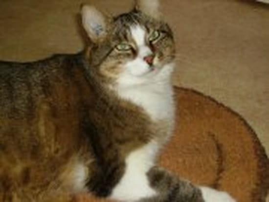 Comment faire pour emp cher fripouille ma chatte de 5 mois de gratter dans les p - Comment empecher un chat d uriner a un endroit ...