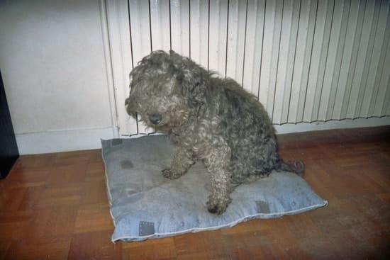 mon chien a un souffle au coeur le v tre aussi r solu. Black Bedroom Furniture Sets. Home Design Ideas