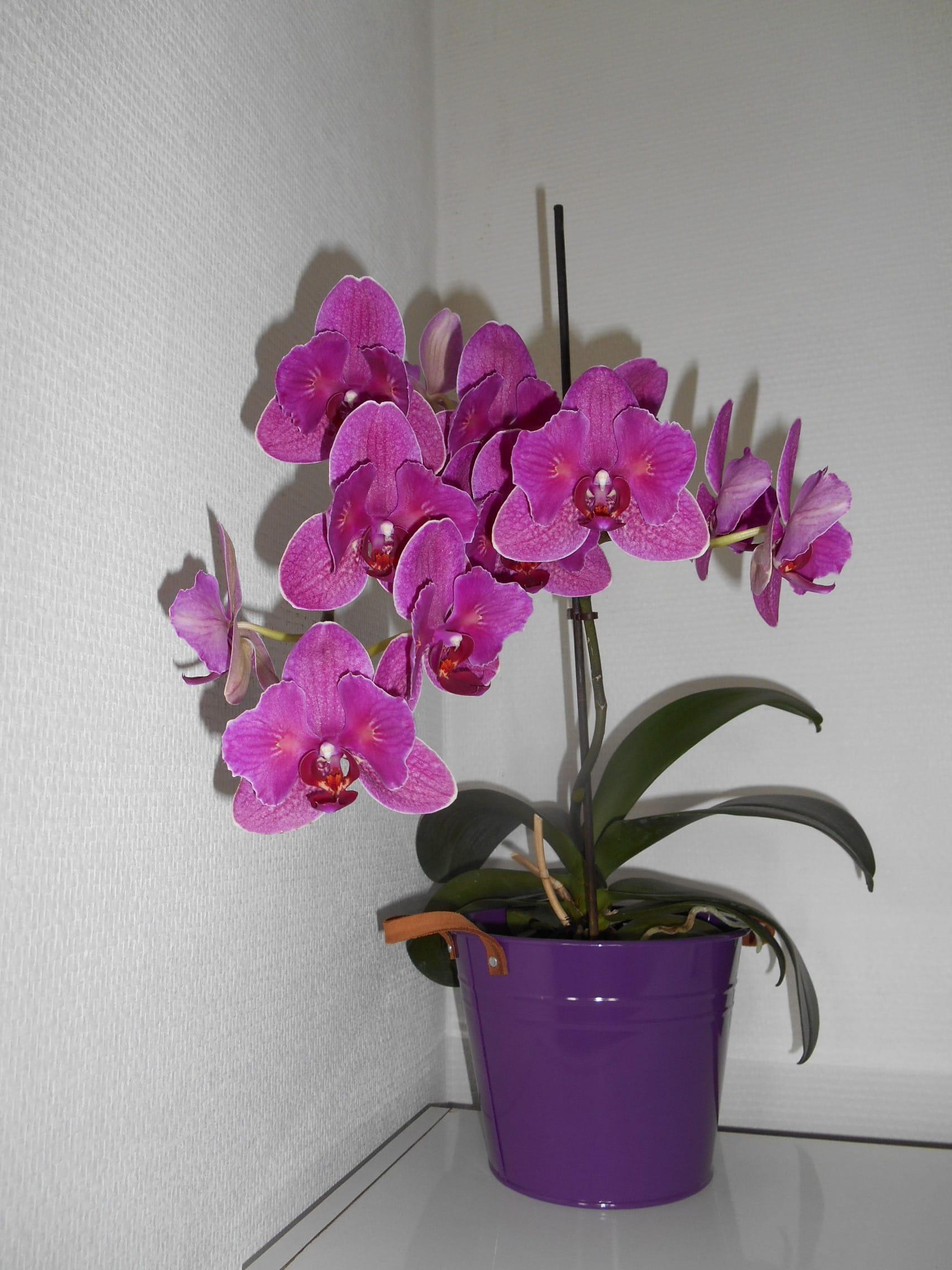 Comment S Occuper D Un Orchidée que faire d'une orchidée après floraison ? - plantes d