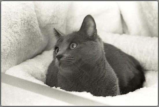 Le plus humide chatte noire dans le monde