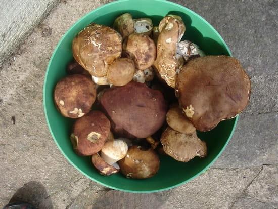 Comment cong ler des champignons r solu - Comment cuisiner des champignons frais ...