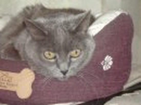 dormir adolescent chatte pics
