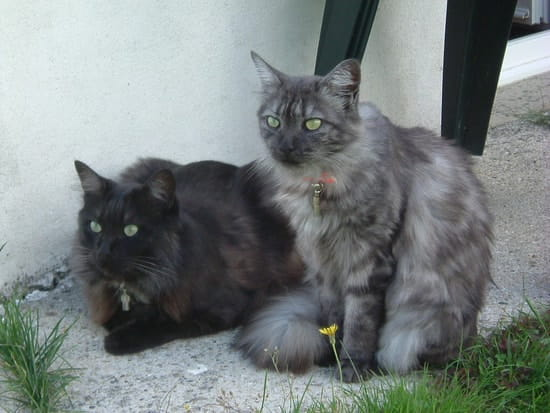 Vieux noir rasГ© chatte