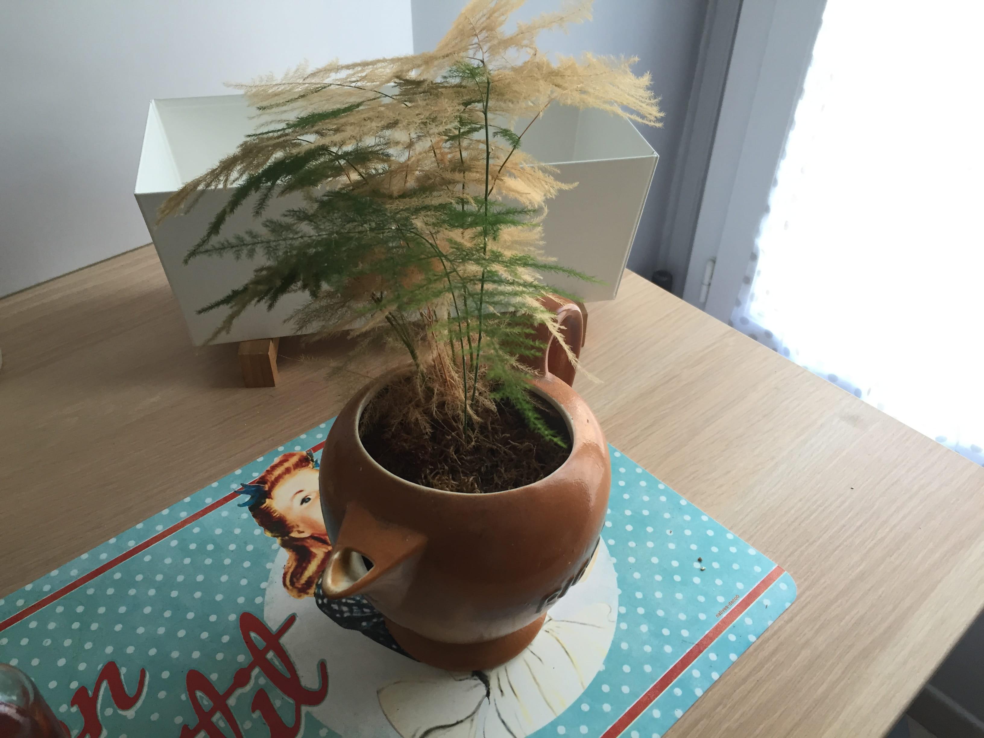 Ma plante devient jaune [Résolu]