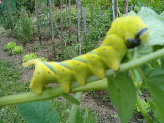 Se d barrasser des escargots et limaces sans produits - Se debarrasser des escargots dans le jardin ...