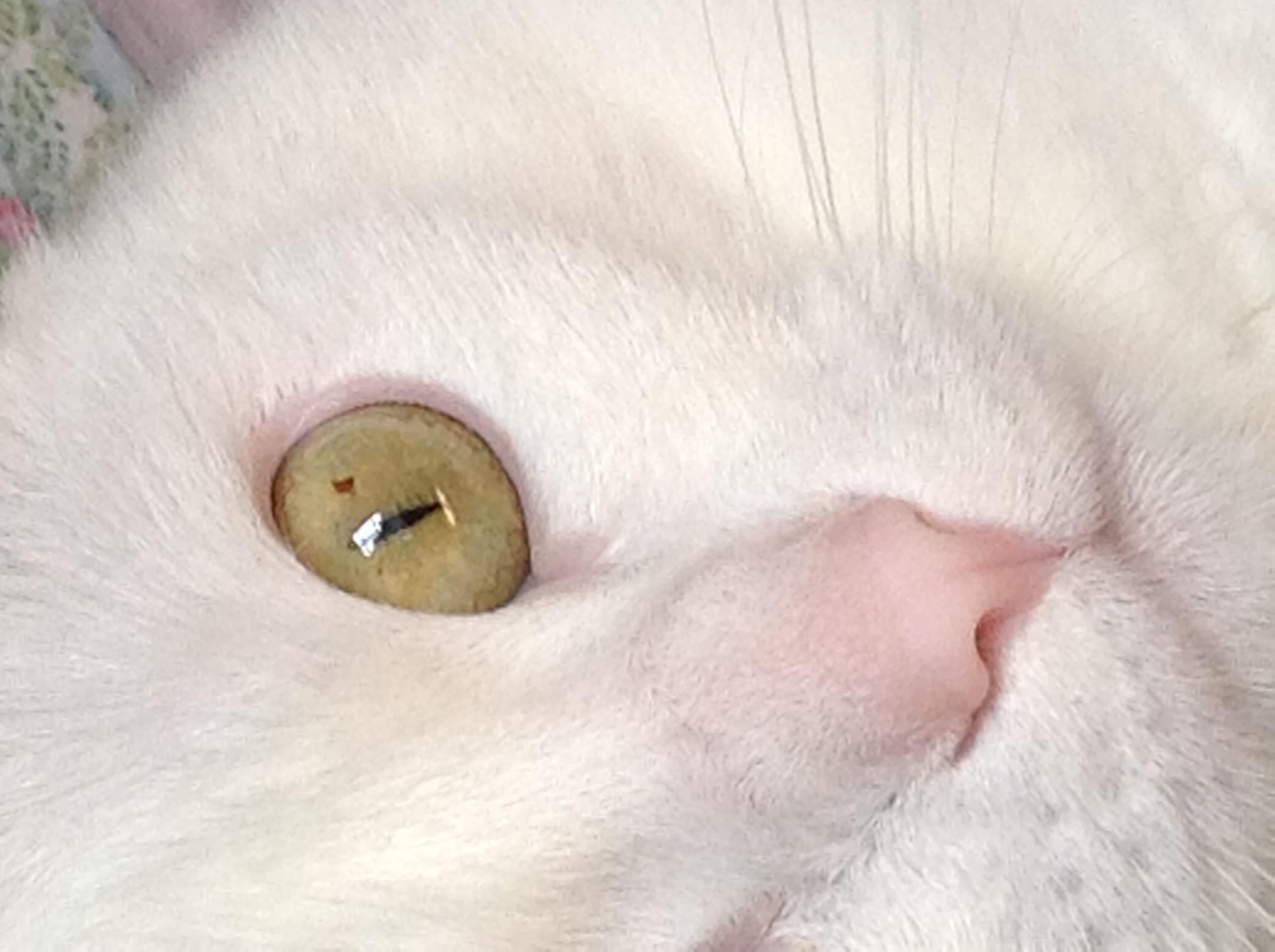 Lœil De Mon Chat Chats