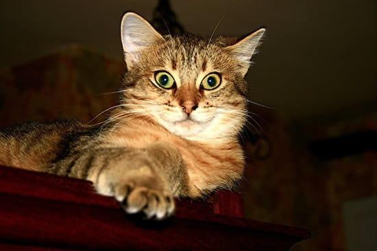 Comment trouvez vous mon chat r solu chats - Comment eloigner les chats de mon jardin ...