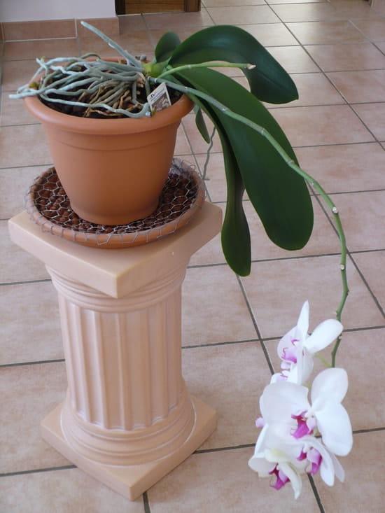 Quand Arroser Mon Orchidee Phalaenopsis Resolu Journal Des